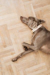 Pet friendly floor   Elite Builder Services